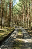 The path in woods. The path through the woods Royalty Free Stock Images
