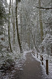 Path through the woods. royalty free stock images