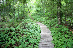 Path in the woods. Over a portage near Wakefield, Quebec Stock Photography