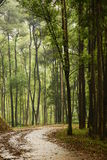 Path in woods. A picture of a curving path in a forest Stock Photo