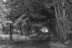 Path through woods along dirt road with light at end royalty free stock image