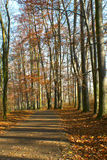 Path in the woods in autumn Stock Photography