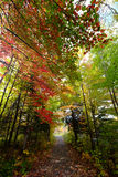 Path through woods in autumn. Path through colorful forest trees in the autumn Royalty Free Stock Photo