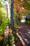 Path through woods in autumn. Path through colorful forest trees in the autumn Royalty Free Stock Photos