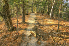 Path in the woods Stock Images