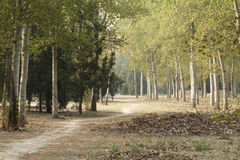 The path through the woods. Autumn, a path through the quiet woods Royalty Free Stock Photos