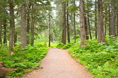 Path into the Woods. Came across this lush green path into the woods at the base of Mt. Alyeska in Girdwood, Alaska royalty free stock photos