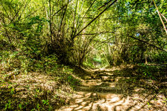 Path in woods, chiangmai Thailand Royalty Free Stock Photography