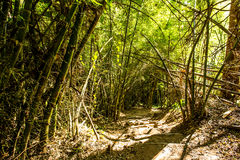 Path in woods, chiangmai Thailand Stock Photography