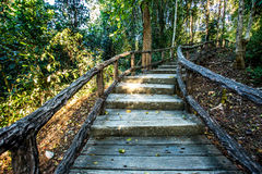 Path in woods, chiangmai Thailand Royalty Free Stock Image