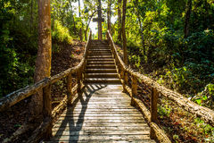 Path in woods, chiangmai Thailand Stock Images