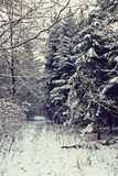 Path in the woods covered by winter snow Royalty Free Stock Photography