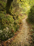Path in the woods in diagonal composition. There are fallen leaves on the ground royalty free stock image