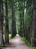 Path in the woods. Direct path in the woods stock images