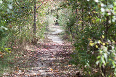 Path through the Woods Royalty Free Stock Image