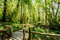Path in woods, doi inthanon , chiangmai Thailand Stock Images