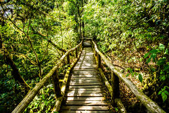 Path in woods, doi inthanon , chiangmai Thailand Royalty Free Stock Image