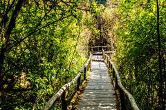 Path in woods, doi inthanon , chiangmai Thailand Royalty Free Stock Photography