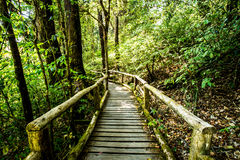 Path in woods, doi inthanon , chiangmai Thailand Stock Photography