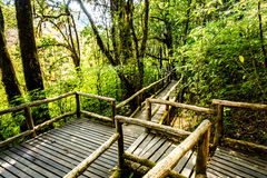 Path in woods, doi inthanon , chiangmai Thailand Stock Photo