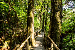 Path in woods, doi inthanon , chiangmai Thailand Royalty Free Stock Photo