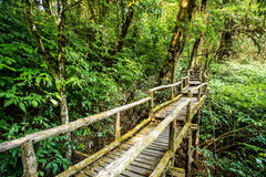 Path in woods, doi inthanon , chiangmai Thailand Royalty Free Stock Images