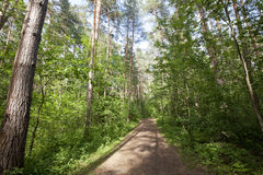Path in the woods. Forest road. No people. Sunny day in the forest Stock Images