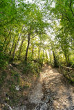 Path in the woods Royalty Free Stock Photos