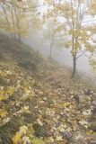 The path in the woods. Italian hills in autumn in a october day.Path in the woods cover with many yellows fallen leaves in early foggy morning. A typical autumn Royalty Free Stock Photos