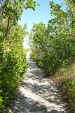 Path Through Woods Leading to Secret Beach Royalty Free Stock Photo