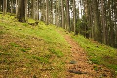 Path in the woods. Leads to the top royalty free stock photo