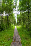 Path in the woods lined with boards Royalty Free Stock Photography