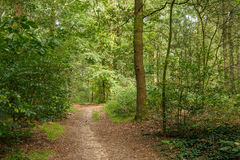 Path through woods Royalty Free Stock Images