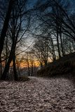 Path in the woods. Mountain path in the woods at sunset royalty free stock images