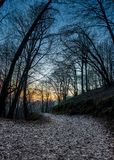Path in the woods. Mountain path in the woods at sunset royalty free stock photography