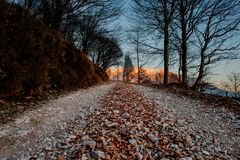 Path in the woods. Mountain path in the woods at sunset royalty free stock image