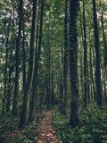 Path in the woods. Narow path in the woods Royalty Free Stock Images