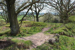 Path through the woods. A narrow path leading through a wood out into open countryside Royalty Free Stock Images