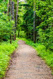 Path in woods Stock Photography