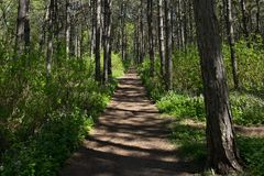 Path in the woods at noon in the spring. Shadow pattern on the path stock photography