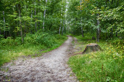 Path in the woods. And an old stump Stock Photography