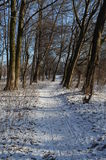 Path in the woods. Path in old winter forest Stock Photo