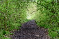 Path through the woods Royalty Free Stock Photo