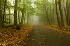 Path through the Woods. Photos of autumn asphalt roads through the forest royalty free stock photo