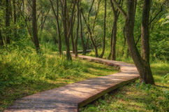 Path in the woods. The path from the planks in the forest Stock Photo
