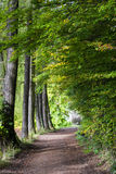 Path in the woods, South Tyrol Royalty Free Stock Image
