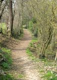 Path in the woods. In spring Royalty Free Stock Photo