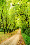 Path in the woods in spring Royalty Free Stock Images