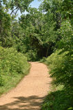 A path into the woods on a summer day Stock Image