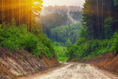 Path through the woods at sunset Royalty Free Stock Image